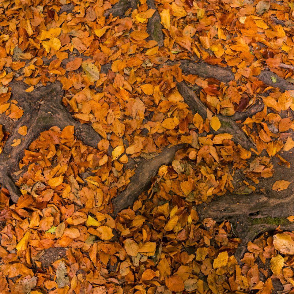 Tiny Autumn Landscapes